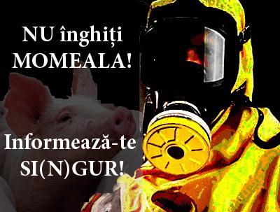 gripa_porcina_06