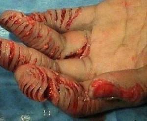 barbarism saudit biblia