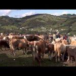 Film documentar: Roşia Montană, un loc la marginea prăpastiei