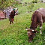 Guvernul interzice vânzarea laptelui provenit din gospodăriile de la ţară