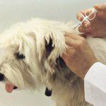 Microcip sub… blană pentru câinii cu stăpân din Cernavodă